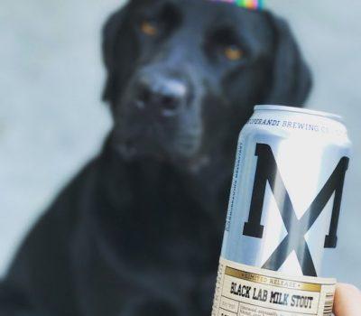 Beer, stout, labrador Retriever, Modus Operandi,