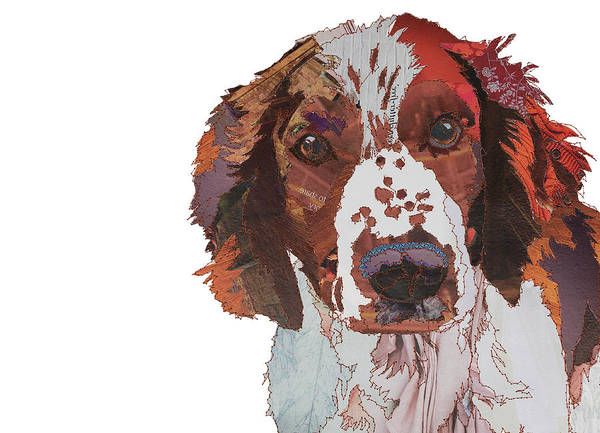 Welsh Springer Spaniel,form, breed standard