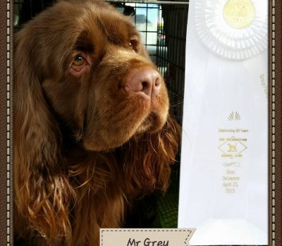 Sussex Spaniel, languishing, frown, breed standard