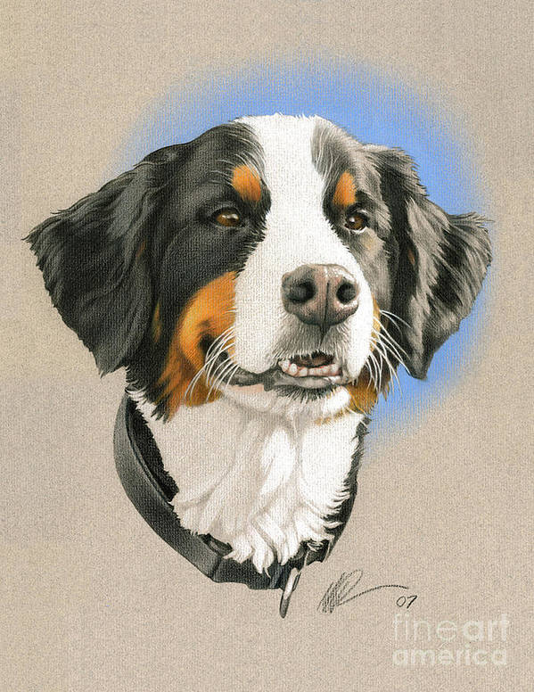 Bernese Mountain Dog, ears, ear set, sparring, Seiger show