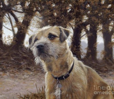 Border Terrier, Brian Seymour Vesey-Fitzgerald, peat bog, moss hole