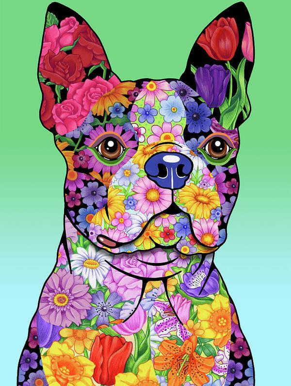 Boston Terrier,Boston Bulldog,Toy Bulldog,American Terrier, round-headed bull terrier,bullethead,