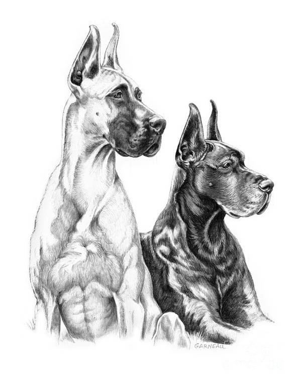 Great Dane, Dogue allemand, German Mastiff, Great Danish Dog, Alano, Heinrich Bodinus,german boarhound