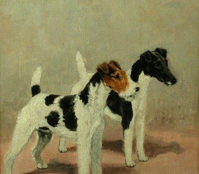 Wire Fox Terrier,Smooth Fox Terrier,Delabere Blaine,history