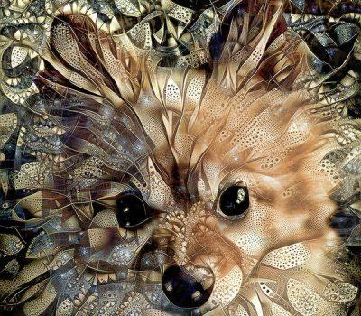 Pomeranian, Fox Dog, Lulu, Pommer, Wolfsspitz German Spitz, Volpino, Spitz Dog
