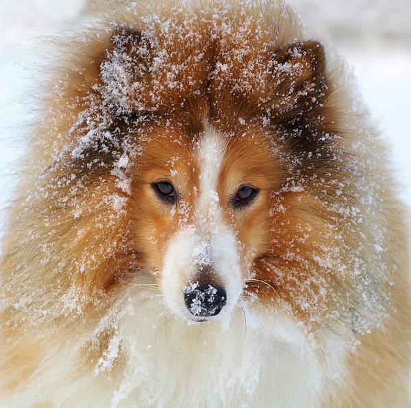 frill, ruff, coat