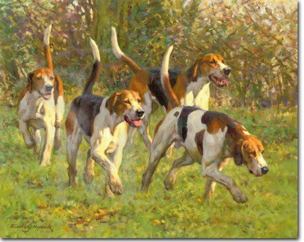 Duke of Beaufort, English Foxhound,foxhunt