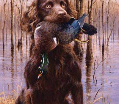 Boykin Spaniel, hunting, hesitant flush