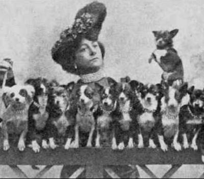 Chihuahua, E. Ruth Terry,Rosina Casselli,