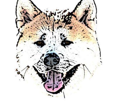 Akita, Odate Dog, Nambu-inu, ji-inu, kurae-inu, kuriya-inu, matagi-inu