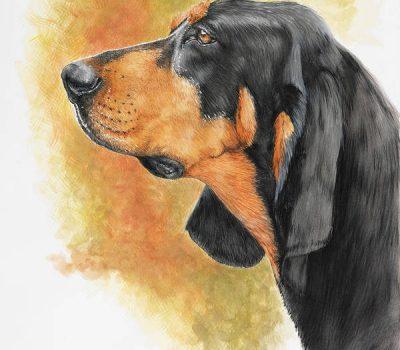 Black and Tan Coonhound, American Black & Tan Coonhound,American Black and Tan Fox and Coonhound