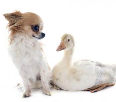 croup, term, goose rump