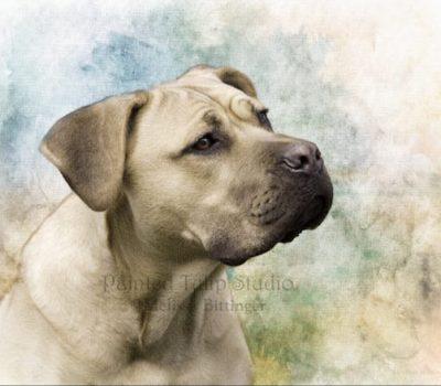 Cane Corso, color, straw stack dog, formentino fulvo, cane da pagliaio,