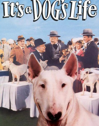 Bull Terrier, literature, movies, Wildfire, Bar Sinister, A Dog's Life