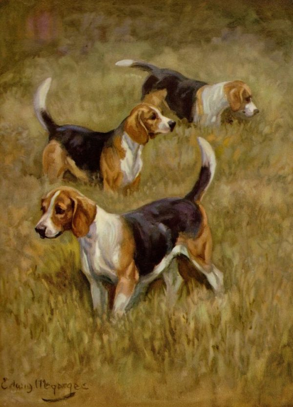 Beagling, Beagle