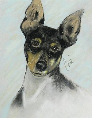Toy Fox Terrier, American Toy Terrier, Ameritoy